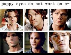 Me: Never mind puppy dog eyes always work on me, as long as they are Sam Winchester's. Or, y'know, Jared's cute eyes! Or Mishas puppy dog eyes Jared Padalecki, Jensen Ackles, Destiel, Misha Collins, Emmanuelle Vaugier, Captive Prince, Under Your Spell, Supernatural Memes, Supernatural Crossover