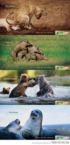 We are animals…