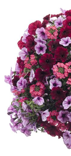 "Container Gardening Recipe -- A combination of pinks and reds is what defines the rich colors of ""Tons of Fun"". Container Flowers, Flower Planters, Flower Pots, Flower Baskets, Container Plants, Organic Gardening, Gardening Tips, Gardening Supplies, Beautiful Gardens"