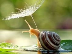 Photos:  Who Knew Snails Could Be So Cute