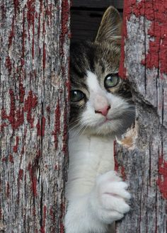 A barn cat, submitted by John Schultz
