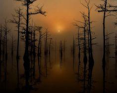 """Diffused Light"" at Black Bayou Lake Refuge, LA – by Burg Ransom"