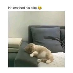 Any cats and kitten that are cute. See more ideas about Cute cats, Cute kittens … Any cats and kitten that are cute. See more ideas about Cute cats, Cute kittens Tags: Funny Animal Memes, Funny Animal Videos, Cute Funny Animals, Funny Animal Pictures, Cute Baby Animals, Cat Memes, Funny Cute, Funny Dogs, Cute Cats