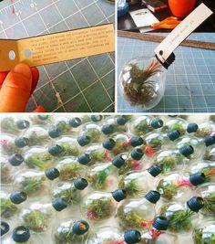 Image Detail for - Light bulb terrariums- a tutorial | a subtle revelry | the art of ...