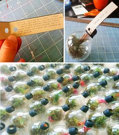 Image Detail for - Light bulb terrariums- a tutorial | a subtle revelry | the art of ...