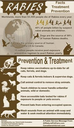 September is Rabies Awareness Month [Infographic] - Rabies kills 55,000 people needlessly each year, half of which are children under the age of 15. World Rabies Day is Sept. 28th, please help by caring & sharing.