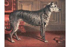Deerhound Lithograph, C. 1880 on OneKingsLane.com