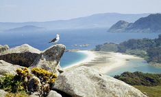 Islas Cíes, Galicia: Spain's treasured islands | Travel | The Guardian Camping In Maine, Winter Camping, Places In Spain, Places To Go, Costa, Acadia National Park Camping, Camping Activities For Kids, Spain Holidays, North West