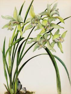 Botanical White ORCHID Print Vintage Flower Print Cottage Decor Cymbidium #2530 #Vintage
