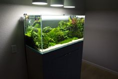I've been on this site for a long time and never made an account. My brother told me I should share my aquarium. What do you guys think? - Imgur