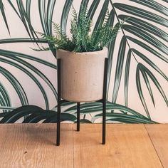 Loving this TrYpod combo by Something Steel and Modern Crete Decor. They're two local brands, both based in Somerset West, creating beautiful decor items for your home. Somerset West, Crete, Furniture Decor, Decorative Items, Planter Pots, Steel, Modern, Table, Beautiful