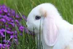 bildergebnis f r s e hasen bilder hasen pinterest pet rabbit rabbit und animals. Black Bedroom Furniture Sets. Home Design Ideas