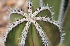 3900x2600 Widescreen cactus