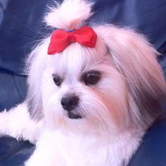 My baby....bella Malteser, Teacup Puppies, My Princess, Cute Dogs, My Love, Baby, Animals, Friends, Long Hair