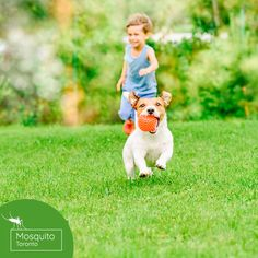 You want your dog to be safe while playing in the yard, but you also want your landscaping to survive. With proper planning, you can have both. Here are 13 dog-friendly landscaping ideas for you to consider. Cute Puppies, Cute Dogs, Dog Illnesses, Puppy Cuddles, Crate Training, Training Your Puppy, Outdoor Dog, Dog Friends, Dog Owners