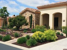 Tuscan-Inspired Entry ~ A tame planting palette of Mediterranean Spurge (Euphorbia characias), Society Garlic (Tulbaghia violacea), Italian Cypress (Cupressus sempervirens) and the very important Italian Stone Pine (Pinus pinea).