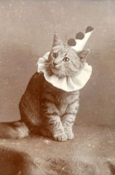 """This is a real vintage cat pic from The cats name is Pierrot. This is probably thinking, """"Why did they put a dunce hat on my head? Crazy Cat Lady, Crazy Cats, Animals And Pets, Cute Animals, Pierrot Clown, Image Chat, Photo Chat, Vintage Circus, Cool Cats"""