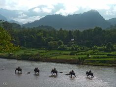 Elephants cross a tributary of the Mekong River in Laos.