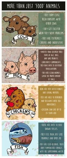 Reject speciesism- go vegan! I'm vegetarian now, out f loyalty to animals. I hope one day I become vegan. Racing Extinction, Vegan Facts, Vegan Quotes, Vegetarian Quotes, Why Vegan, Vegan Raw, Stop Animal Cruelty, Vegan Animals, Save Animals