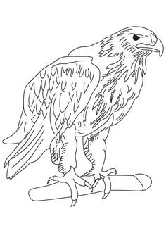 golden eagle coloring page - free hawk images to draw a cartoon hawk step by step