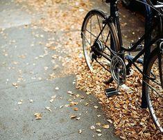 un velo en automne