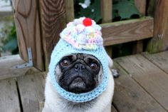 Pickles the pug models hats that his owner designs and sells for dogs - must see all of them on Etsy! Hysterical!