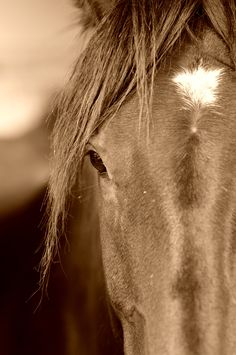 Sepia horse - Amazing photo