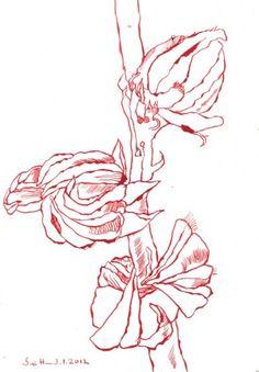 Hibiscus  http://www.susannehaun.com