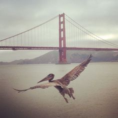 166 best images about San Francisco Bay Area <3 on Pinterest | Bay ...