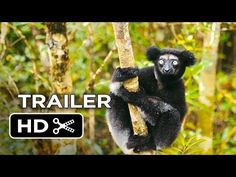 ▶ Island of Lemurs: Madagascar Official Trailer #1 (2014) - Nature Documentary HD - YouTube