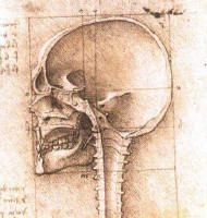 DaVinci anatomical drawings