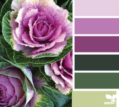 CULINARY COLOR {produced palette} January 7 2015🏳