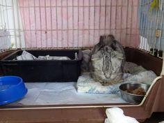 スコ・ふくちゃん 不調でとても心配な状態です - http://iyaiyahajimeru.jp/cat/archives/63151