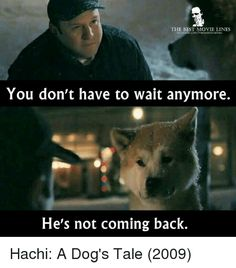 Hachi A Dogs Tale, Best Movie Lines, A Dog's Tale, Hachiko, Akita Dog, Good Movies, Comebacks, Movie Tv, Films