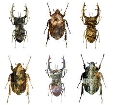Insects, Bee, Illustration, Animals, Ideas, Honey Bees, Animales, Animaux, Bees