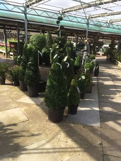 Scotsdales Cambridge Garden Centre Layout Landscape Lifestyle Customer Journey