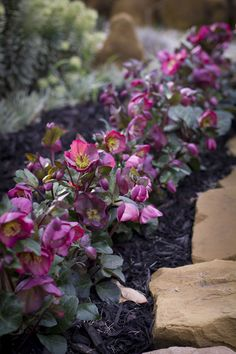 Different Garden Plants Planting Shrubs, Planting Flowers, Mixed Border, Patio Decks, Border Plants, Tree Canopy, Shade Plants, Early Spring, Small Gardens