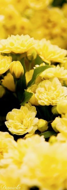 Yellow Flowers #AllThingsYellow