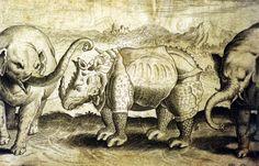 Adrian Collaert rhinoceros sixteenth century.  Adriaen Collaert (ca.1560–1618) was a Flemish designer and engraver. Private collection Laura Ganzinelli.