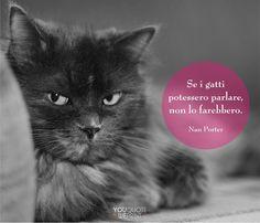 Il 17 febbraio si celebra la Festa nazionale del #gatto. Ecco la nostra raccolta di frasi sui gatti. Se i gatti potessero parlare non lo farebbero