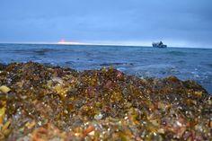 Seaweed photo by Norman Koonoo