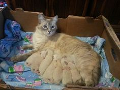 They brought home a stray cat and exactly two months later she gave them seven little surprises. In just eight weeks, they went from having ho cats to Cute Little Kittens, Cats And Kittens, Cute Cats, Funny Cats, Funny Vid, Baby Animals, Cute Animals, Cute Cat Memes, Mother Cat