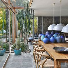 Os cactos são a opção ideal para quem não tem muito tempo disponível para se dedicar a um jardim. Assim como as suculentas (das quais já falamos por aqui),
