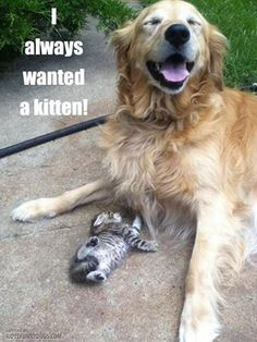 I always wanted a kitten!