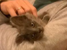 Llegó otra integrante a la familia:se llama Chispita!!