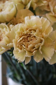 Carnation [Birth of January. Pink (gratitude), red (flashy), striped (refusal), white (remembrance), yellow (cheerful).]