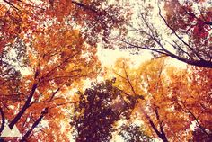 If God isn't a Hokie, then why do the leaves turn maroon and orange in the fall?  :)