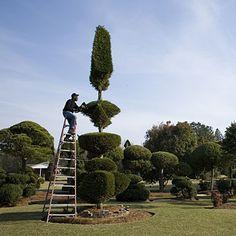Pearl Fryar Topiary Trees 10 Spectacular Topiary Designs. Pearl Fryar ...