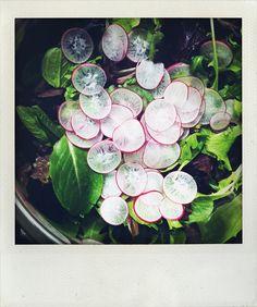 ... Radish on Pinterest | Radish Salad, Watermelon and Pickled Radishes
