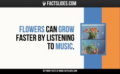 42 Facts about Music ←FACTSlides→ Flowers can grow faster by listening to music.
